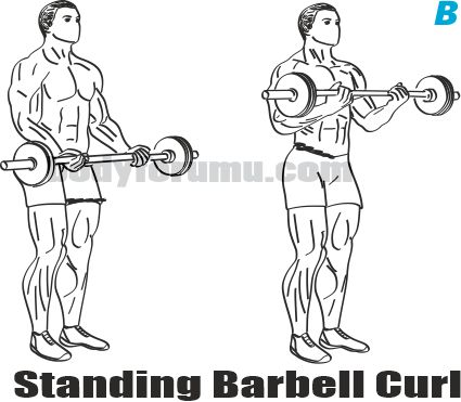 Standing Barbell Biceps Curl