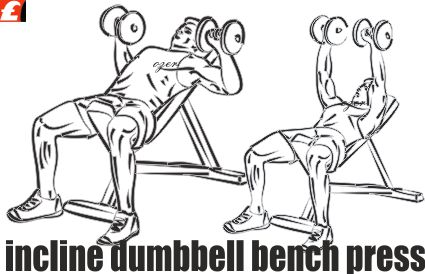 Incline Dumbbell Bench Press (Üst Göğüs Dambıl Pres)