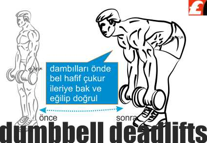DumbbellDeadlift Exercise
